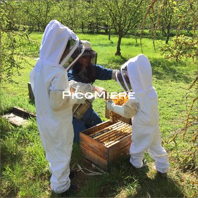養蜂ファミリー
